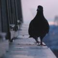 Если голубь сел на подоконник за окном: чего ожидать
